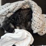 wilma under a blanket